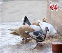 شاب يرفع شعار «اللي معاه قرش محيره يجيب حمام ويطيره».. فيديو