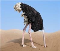 3 أسباب تدفع النعام لدفن رأسه في الرمال