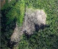 دراسة: زراعة الأشجار تضر البيئة