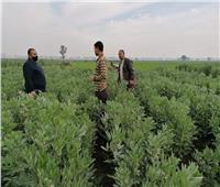 «الزراعة» تواصل جولاتها الميدانية بحقول الفول البلدي في دمياط | صور