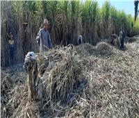 حكايات  «الحصاد المُر».. صناعة السكر من الأرض حتى المصنع