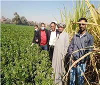 يوم حقل جديد للزراعة وسط «الفول البلدي» في الأقصر.. صور