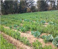 حملة للاطمئنان على زراعات «الفول البلدي» بالإسماعيلية | صور