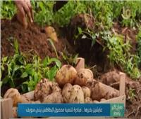 «عايشين بخيرها».. مبادرة لتنمية محصول البطاطس ببني سويف