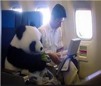 بعد أن كانت «أتوبيس أرياف».. شركة طيران أمريكية تقنن اصطحاب الحيوانات على متنها