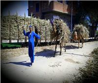 حكايات  شيال الحمول.. «عماد» ممثل هاو يغوص في قش القصب