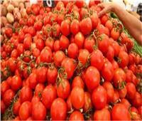 «الزراعة» تحذر من أحد أصناف «الطماطم» المنتشرة فى الأسواق