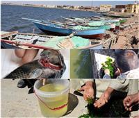 5 كراكات و5 ملايين زريعة جمبري.. جهود إعادة التوازن البيئي لبحيرة قارون