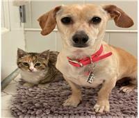 صور..تعرف على قصة الكلب «كونا» الأم البديلة وجليسة الحيوانات الضالة