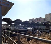 """""""زراعة المنوفية"""": تفقد11 سوقًا للماشية و20 مصنع أعلاف.. يناير الماضي"""