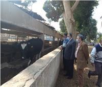 محافظة أسيوط تواصل تطوير إنتاجية مشروع الثروة الحيوانية