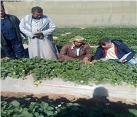 توصيات وزارة الزراعة لإنتاج محصول «فراولة» مطابق للمواصفات