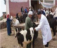 انطلاق الحملة القومية لتطعيم الماشية ضد الحمى القلاعية بالقليوبية