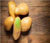 احذر.. بقع البطاطس الأخضر والبنفسجى «سامة»
