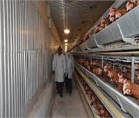 ضبط 15 طن دواجن فاسدة في حملة على مصانع مواد غذائية بالقليوبية