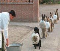 «جوع كلبك يتبعك»| أصل المثل الشعبي.. ملك من ملوك حمير