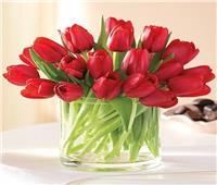 عيد الحب | سر ارتباط «زهرة التوليب» بالرومانسية