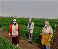 «لجنة من الزراعة» تتابع محصول القمح للتأكد من تنفيذ الإرشادات| صور