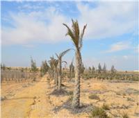 تبوير أرض «زراعة القاهرة» بفعل فاعل | صور ومستندات