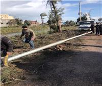 سقوط شجرة وعمود كهرباء بطريق دمياط المنصورة بسبب الطقس