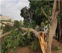 سقوط شجرة على سيارة ميكروباص بقنا