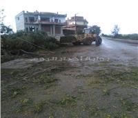 صور| لشدة الرياح والأمطار.. سقوط  بعض الأشجار علي طريق «قطور» الغربية