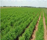 «زراعة المنيا»: استقرار الزراعات الشتوية رغم التقلبات المناخية