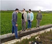 «زراعة دمياط» لا توجد تلفيات في المحاصيل الشتوية بسبب سوء الأحوال الجوية