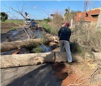 سقوط أشجار وتوقف الحركة ببعض الطرق بالقليوبية بسبب الأمطار