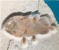 «الكولاكانث» اكتشاف جديد لحفرية حية من عصر الديناصورات