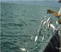 محافظ كفر الشيخ يكشف موعد عودة حركة الصيد بـ«البرلس»