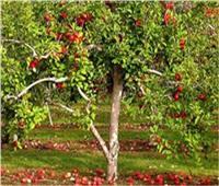 كيف تتعامل مع أشجار «الفاكهة المتساقطة» خلال فبراير؟