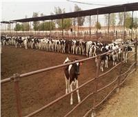 «الزراعة» تصدر 3 آلاف ترخيص تشغيل لأنشطة الثروة الحيوانية والداجنة