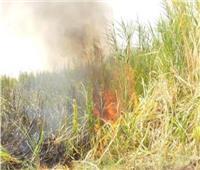 السيطرة على حريق في زراعات القصب بدشنا
