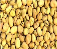 زراعة 320 ألف فدان بمحصول الفول تحقق الاكتفاء الذاتي