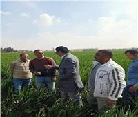«الزراعة» تطمئن على حالة المحاصيل الشتوية في بني سويف