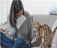 أعراض «حساسية القطط» وطرق الوقاية منها