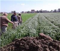 زراعة المنوفية: ندوات إرشادية للالتزام بالسياسة الصنفية لمحصول القمح