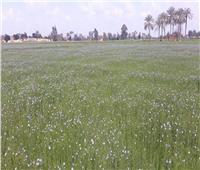 «الزراعة» تنفذ يوم «حقل» لمحصول الكتان حول أهميته الاقتصادية بالشرقية