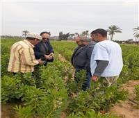 الحملة القومية للنهوض بالمحاصيل البقولية تقدم الإرشادات للمزارعين بالنوبارية
