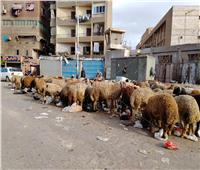 خراف القمامة.. من مقالب الجيزة لبطون المصريين  فيديو