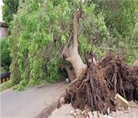 الجيزة توضح حقيقة قطع أشجار بشارع النيل