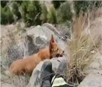 عملية إنقاذ «كلب» من الموت تستغرق ساعتين