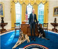 كلاب بايدن تستمتع بالحياة في البيت الأبيض