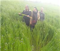 «الزراعة»: تنفذ يوم حقل لمحصول الكتان وتقدم نصائحها لمزارعي البحيرة.. صور