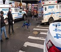 شرطة نيويورك تستخدم روبوتًا رباعي الأرجل للإنقاذ | صور