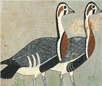 «موناليزا مصر القديمة» تكشف عن طائر غريب مُنقرض | صور