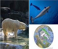 خبراء أمريكيون يحذرون من تأثير التغير البيئي على الحيوانات في القطب الشمالي