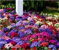 الزراعة: معرض زهور الربيع الـ88 أول مارس بحديقة الأورمان