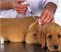 الزراعة: تحصين 3176 «كلب ضال» ضد مرض السعار خلال شهر